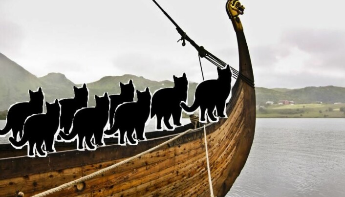 Viking sailors took their cats with them