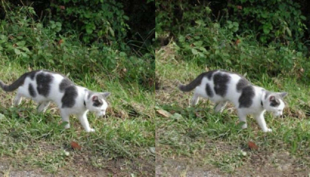 No, they're not the same. The picture on the left is the original. (Photo: Steven Le Moan, NTNU)