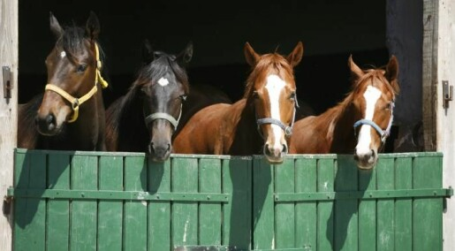 Horses can communicate through symbols