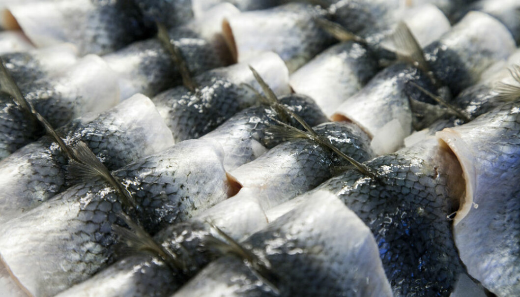 Herring filets ready to be consumed. (Photo: Colourbox)