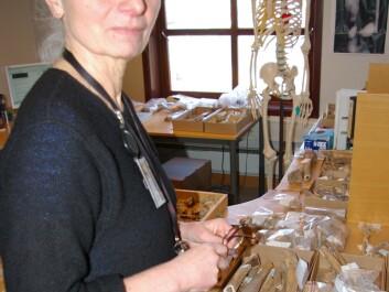 Paula Utigard Sandvik at the Museum of Archaeology in Stavanger, where the skeletons are now being correctly assembled and analysed. (Photo: Bjørnar Kjensli)