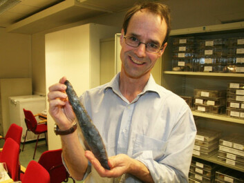Christopher Prescott, professor of archaeology at the University of Oslo, with a flint dagger from the late Neolithic. These knives were important status objects linked to the establishment of agriculture in Norway. (Photo: Asle Rønning)