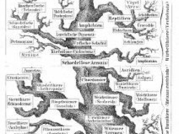 The tree of life, as the pioneer biologist Ernst Haechel perceived it in 1874. Down on the left is the Spongia branch, the sponges.