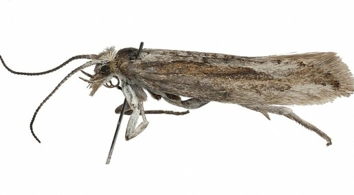 Arctic moth turns up after 140 years
