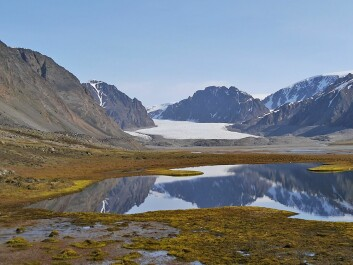 Ringhorndalen by Wijdefjorden on Spitzbergen, the largest island of Svalbard. This is where the little moth, native to Svalbard, was re-discovered after being missing for over 140 years. (Photo: Geir E. E. Søli)