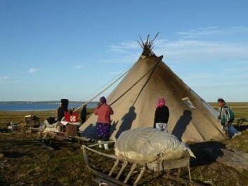 """The Nenets' traditional dwelling tent is called """"chum"""" in Russian, a word derived from the Udmurt language. The Nenets word for the structure is """"mya"""". Today the whole family builds the mya, but previously only women and children built it. (Photo: Zoia Vylka Ravna)"""