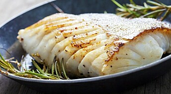 Cod may be healthier than salmon for overweight men