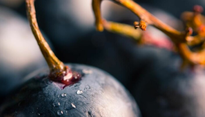 A Bronze Age grape shakes up history