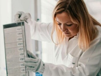 Cecilie Kyrø at the Danish Cancer Society Research Center studies  the connection between cancer and the intake of whole grains. (Photo: Nordforsk / Kim Wendt)