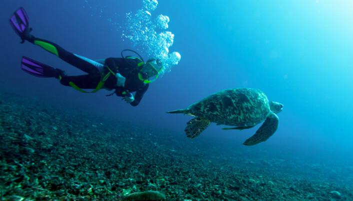 Marine reptiles closer to extinction