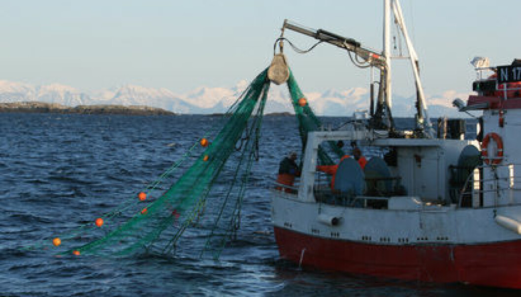 Fishing for cod is the coastal fleet's top priority. (Photo: Frank Gregersen/Nofima)
