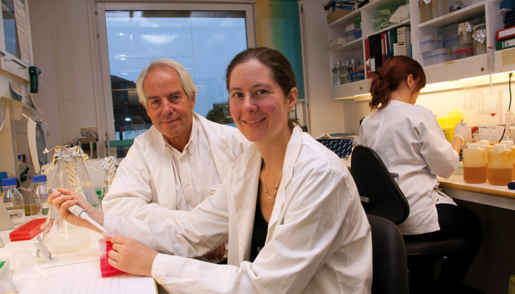 """The new invention Vaccibody can also be used to make vaccines against flu,"" say PhD student Gunnveig Grødeland and Professor Bjarne Bogen. (Photo: Yngve Vogt)"