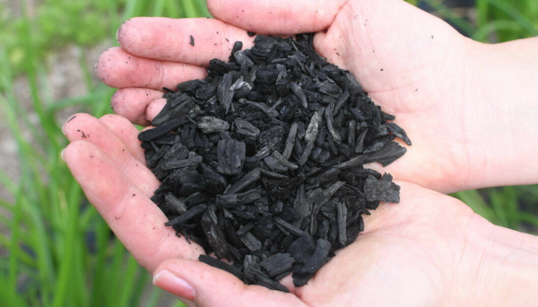 Biochar can help us address many environmental challenges. This form of CO2 capture and storage reduces the need for fertilisers and may lead to better crop yields. It can also remove heavy metals from the soil. (Photo: Lisbet Jære)