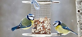 Be careful not to overfeed wild birds