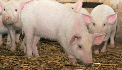 Can Farm Animals Stomach New Types Of Feed