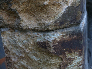 """This close-up shows pitting and weathering of the Grytdal stone in the cathedral walls. Geologist Per Storemyr described the stone as """"literally rusting to pieces"""" and that it should have never been used as building stone. (Photo: Nancy Bazilchuk/NTNU)"""
