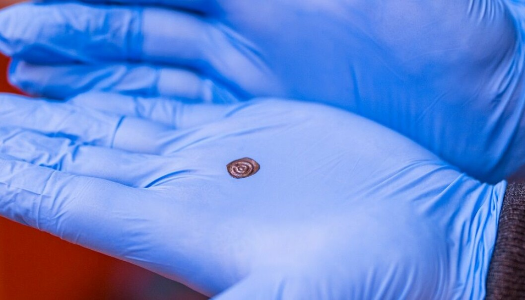 A bracteate weighing 0.085 grams. By comparison, a modern-day Norwegian krone weighs 4.35 grams, more than 50 times as much. (Photo: Julie Gloppe Solem, NTNU)