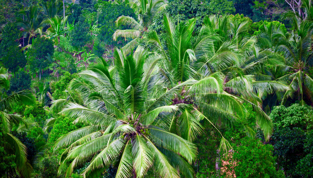 Norway will spend nearly eight hundred million Euros to stop deforestation in Indonesia. (Photo: Colourbox)