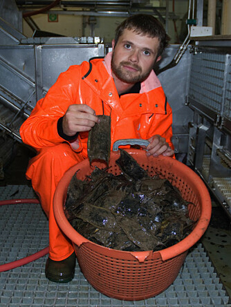 Arve Lynghammar with a basket of Arctic skate egg capsules, found just south of Svalbard. (Photo: Merete Kvalsund, Institute of Marine Research)