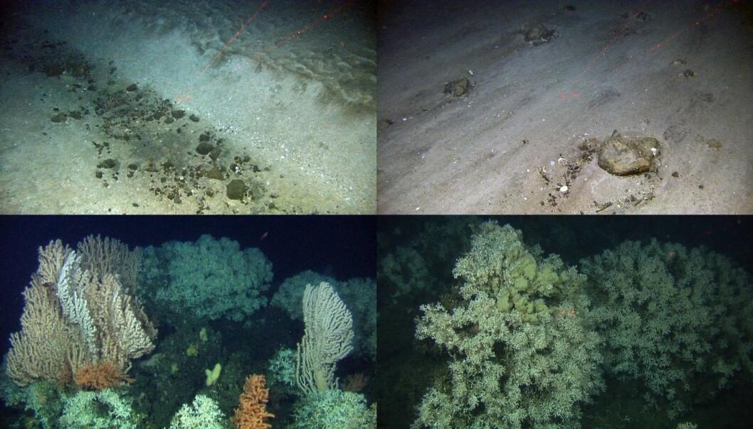 Various seafloor habitats from the Lofoten-Vesterålen shelf. (Photo: MAREANO-Institute of Marine Research)