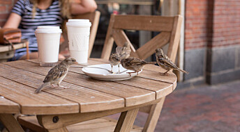 House sparrows and humans are old buddies