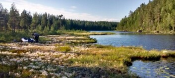 Boreal lakes are becoming browner, but the fish don't mind