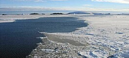 An ice-free oasis in the Arctic sheltered life during the last ice age