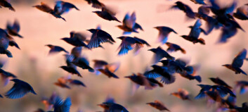 How did birds first begin to fly?