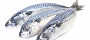 Holy mackerel! Debunking myths about this silvery fish