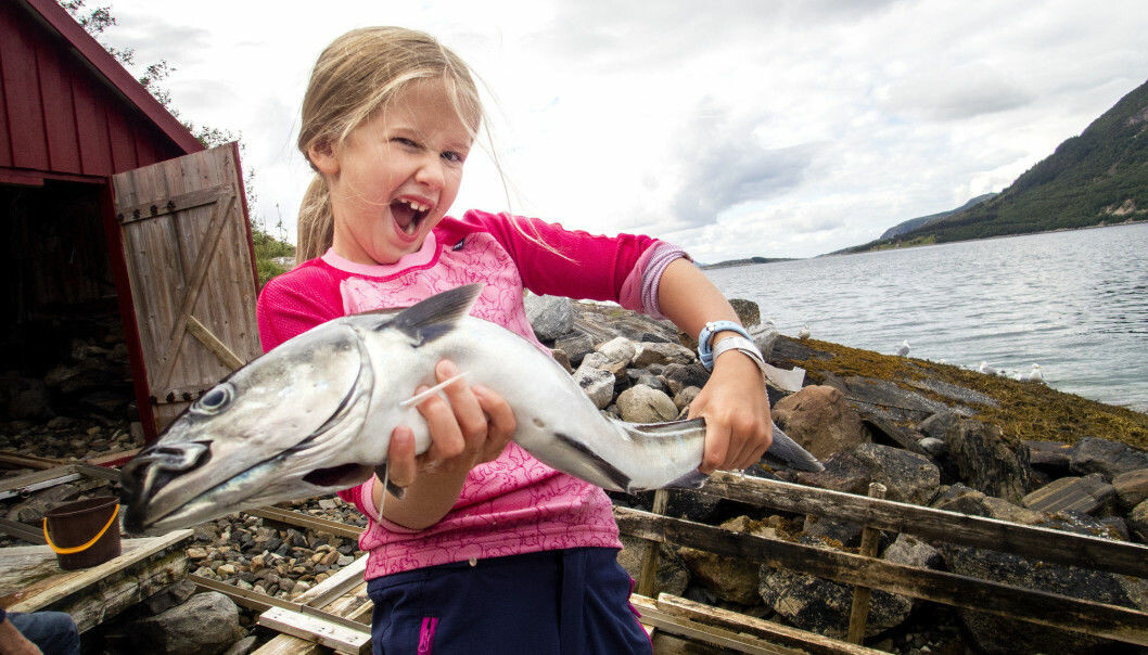 A happy girl with a newly caught coalfish.  Some places along the Norwegian coast are far richer in fish and other marine life than others.  Now scientists in Trondheim can explain why. (Photo: Gorm Kallestad / NTB scanpix)