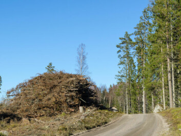 These leftovers from a clearcut — branches and tree tops that aren't currently being used in Norway — could be transformed into bio jet fuel. (Photo: Colourbox)