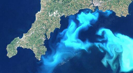 Big algae surprise in mountain lake