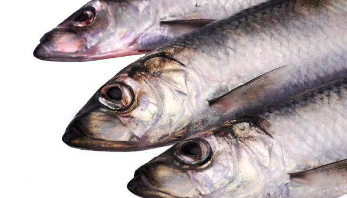 Diverse herrings are super survivors