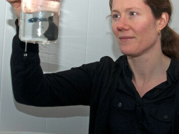 Elisabeth Halvorsen is supervising egg production of the Calanus hyperboreus she brought home with her from the expedition. (Photo: Rudi Caeyers)