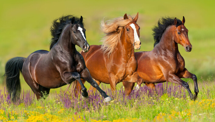 If one of these horses fell, would it be embarrassed? (Photo: Kwadrat / Shutterstock / NTB scanpix)