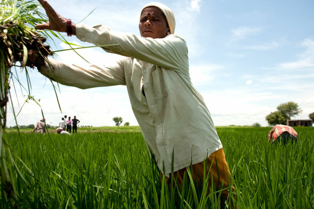 Empowering women smallholders and equipping them with the same knowledge and support systems as men can contribute to climate change adaptation, food and nutrition security and rural development. (Photo: Ragnar Våga Pedersen)