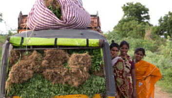 According to FAO, closing the gender gap could increase yields on smallholder farms by 20-30 percent, lifting 100-150 million people out of hunger. (Photo: Ragnar Våga Pedersen)