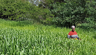 : A key recommendation from the InnovAfrica project is to empower rural women at an individual level. The smallholder on this picture, Ruth, is experiencing huge success with Bracharia grass production in Kenya. (Photo: Marte Lund Edvartsen)