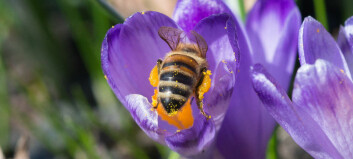 Fighting the insect apocalypse with hotels, flowers and dead trees