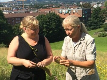 Botanist and lecturer Kristina Bjureke (right) collects seeds from a meadow in Oslo along with Gro Hilde Jacobsen from Bymiljøetaten, Oslo's urban environment agency.