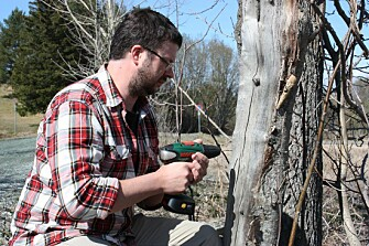 Insect researcher Frode Ødegaard drills holes for the insects in a dry tree trunk. (Photo: Christina Jones, NINA)