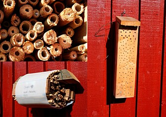 Bee hotels can be constructed many different ways. (All photos: Frode Ødegaard, NTNU)