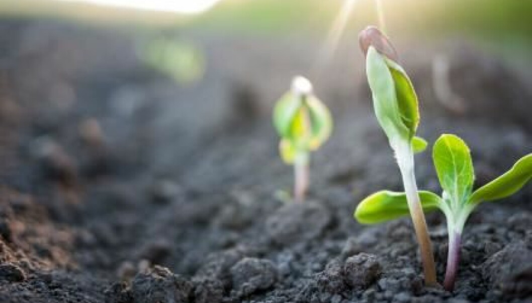 Healthy plant growth and optimized plant yields are dependent on the retention of adequate phosphorus. (Photo: Microstock)