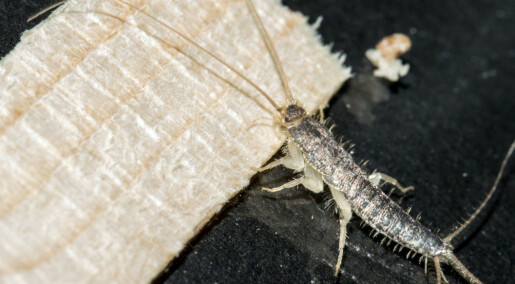 You can combat long-tailed silverfish efficiently and safely, it turns out