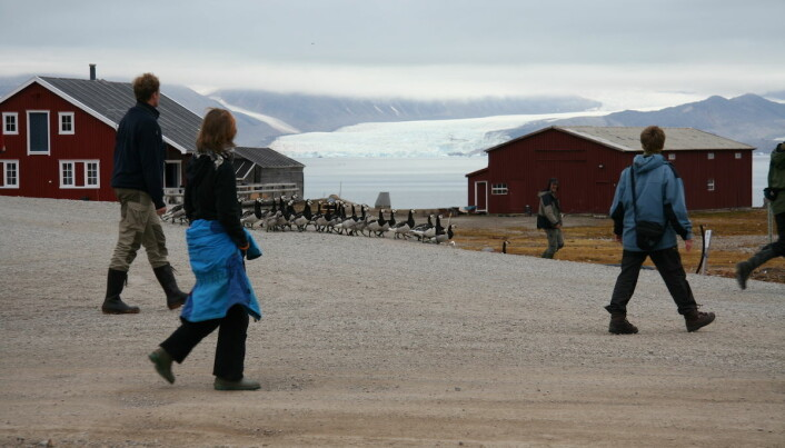 Researchers and geese in Ny-Ålesund. (Photo: Oddvar Midkandal)