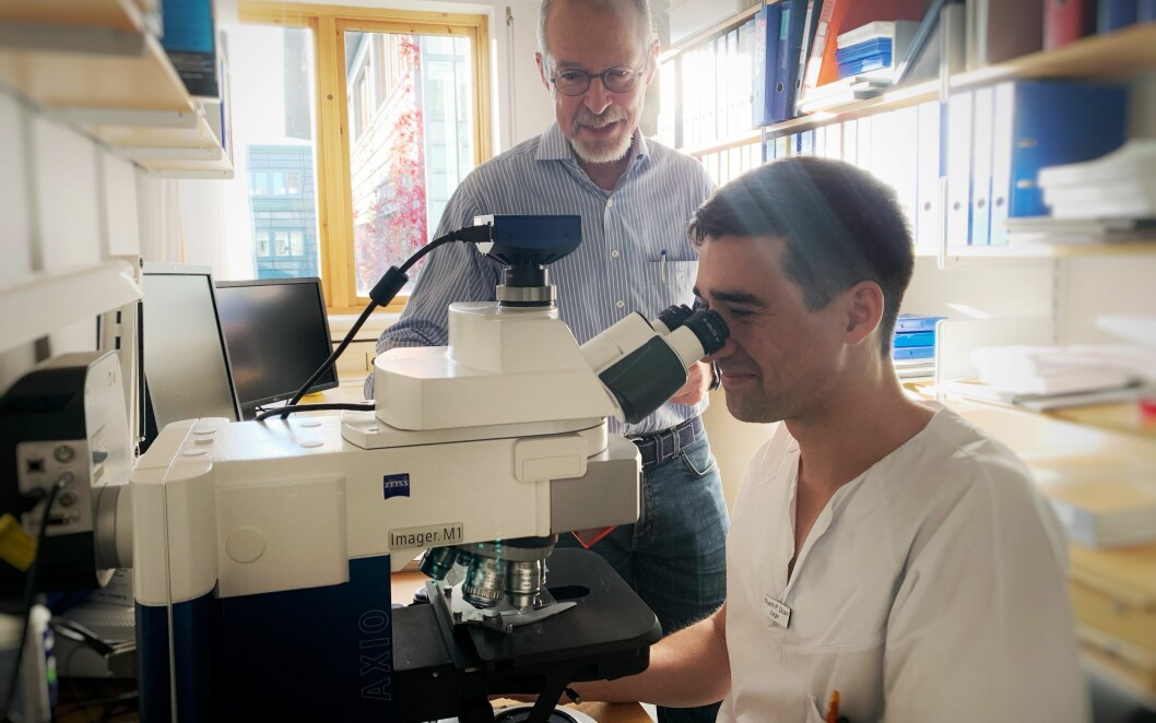 Thanh Pierre Doan (at the microscope) found that the model of his supervisor Menno Witter (standing behind the microscope) was wrong. (Photo: Kavli Institute for Systems Neuroscience)