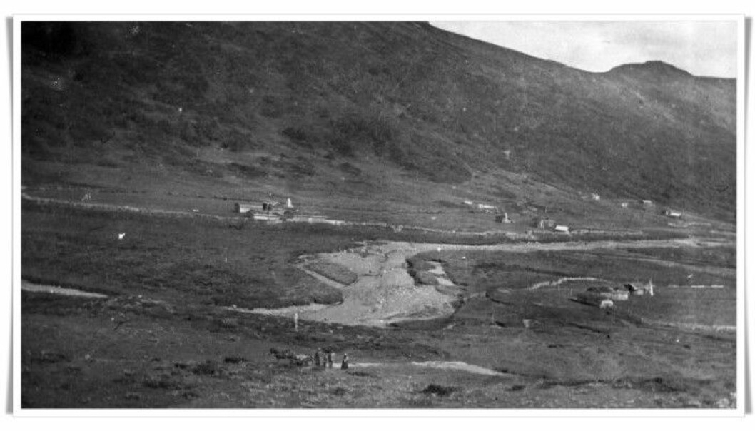 In this photo from Synnerdalen at the head of the valley Budalen in Trøndelag, you can see how the extensive logging of mountain forest dramatically changed the landscape. The picture was taken in 1914. (Photo: Anna Rønning)