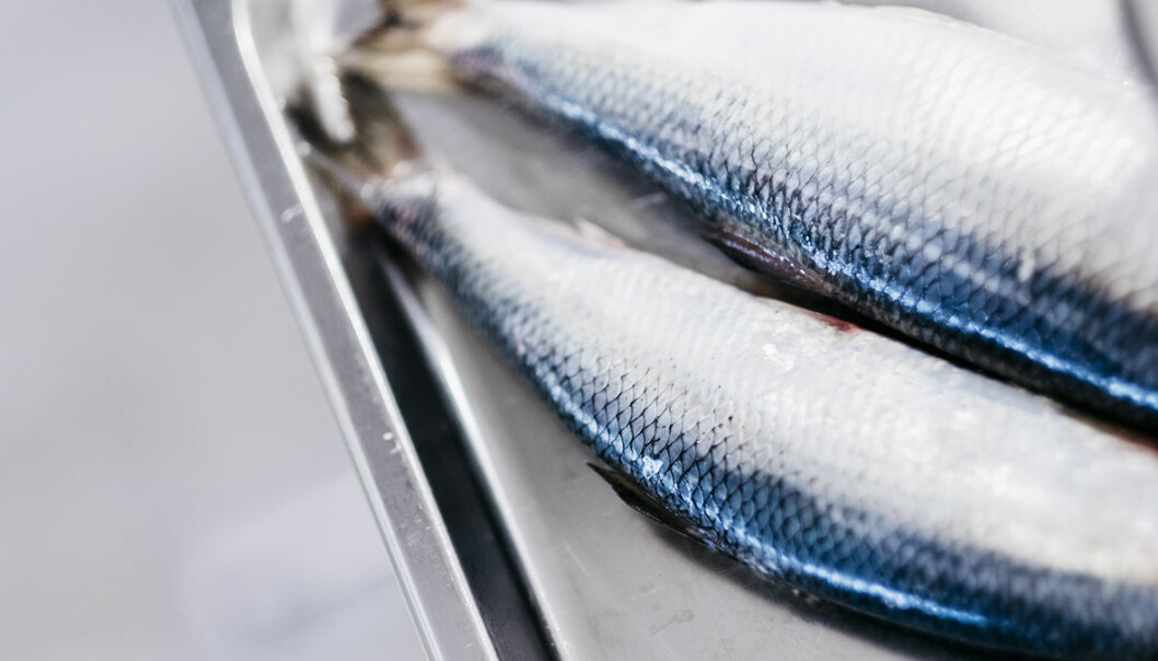 Herring oil has a high level of cetoleic acid, which serves as an omega-3 catalyst.