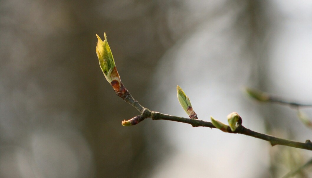 New leaves burst forth in spring, when longer daylight hours open up communication channels.