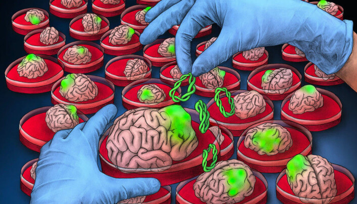 Neuroscientists cultivate mini-versions of human brains in the lab. Could they become conscious?